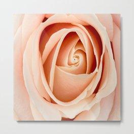 Peach Rose Art Metal Print