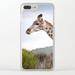 Beautiful close-up of Giraffe in South Africa Clear iPhone Case