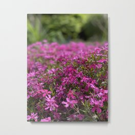 Beautiful Murcia Metal Print