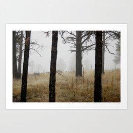 Canyon Mist Art Print