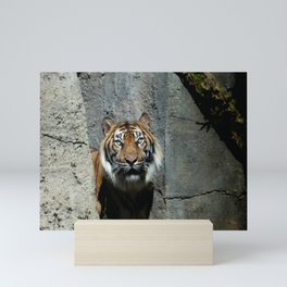 Shere Khan The Tiger, Perhaps? Mini Art Print