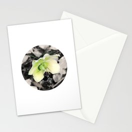 Hellebore Flower Mandala Stationery Cards