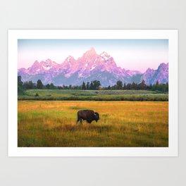 Grand Tetons Bison Art Print