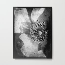 Knockout Roses No.2 Metal Print