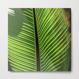 Fine Art Organic Elegant Leaf Macro Photo Art Metal Print