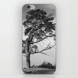 Lonely pine on a hill iPhone Skin