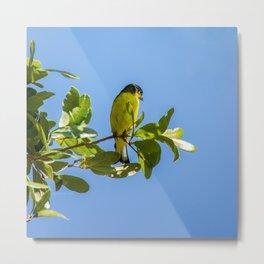 Yellow Bird - II Metal Print