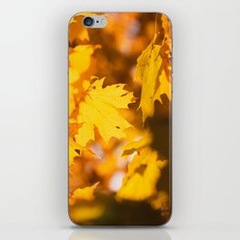 Golden Fall Leaves iPhone Skin