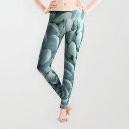 Turquoise Succulents Leggings