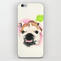 english bulldog iPhone & iPod Skins featuring English Bulldog - F.I.P. - @LucyFarted by PaperTigress