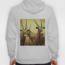 Hi, we are the antelopes. Hoody