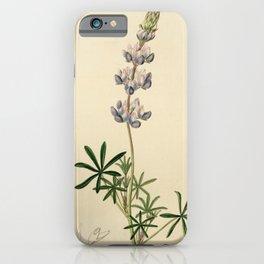 Flower 1705 lupinus nanus Dwarf Lupine18 iPhone Case