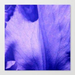 Macro Ultra Violet Iris Canvas Print