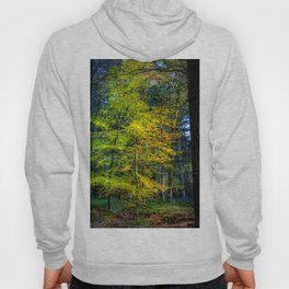 Autumnal Woodland Hoody