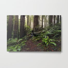 Forest of the Giants Metal Print