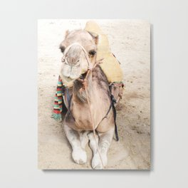 Happy Camel Metal Print