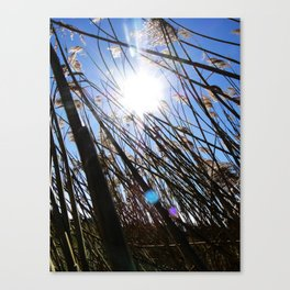 Stuck Canvas Print