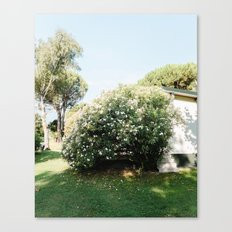 green - plants - roses - living - decoration - design - print - landscape - light - minimalistic Canvas Print