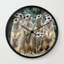 Meerkat20160208 Wall Clock