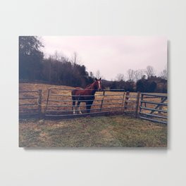 Mountain Horse Metal Print