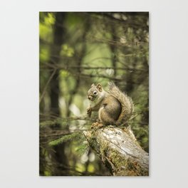 Who You Calling Squirrelly? Canvas Print