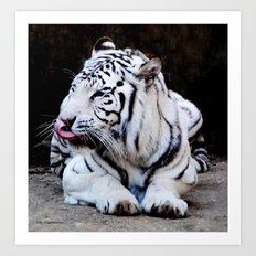 Tiger Tongue Art Print