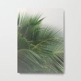 Tropical Palms Metal Print