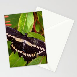 Giant Swallowtail Butterfly Stationery Cards