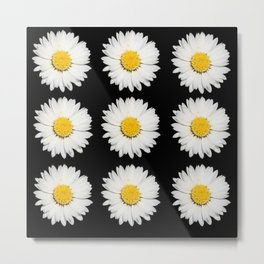 Nine Common Daisies Isolated on A Black Backgound Metal Print