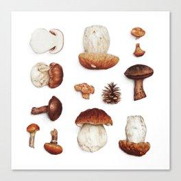 mushroom collection Canvas Print