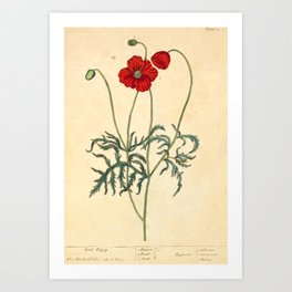 "Red Poppy by Elizabeth Blackwell from ""A Curious Herbal,"" 1737 (benefits The Nature Conservancy) Art Print"