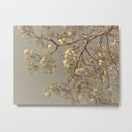 Under the Honey Locust Tree Metal Print