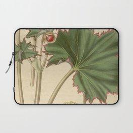 Begonia geraniifolia Laptop Sleeve