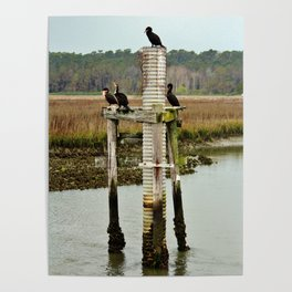Four Cormorants Poster