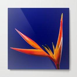 Flower orange blue 7 Metal Print