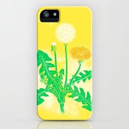 Illustration of the plant Dandelion (Taraxacum) iPhone Case