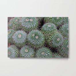Pincushion Cactus Metal Print