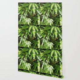 The Fernery Wallpaper