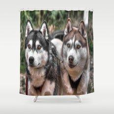Siberian Huskys Shower Curtain