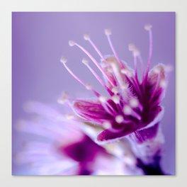 Purple Bloom Canvas Print