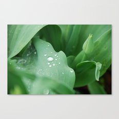 I Dream of Spring Canvas Print