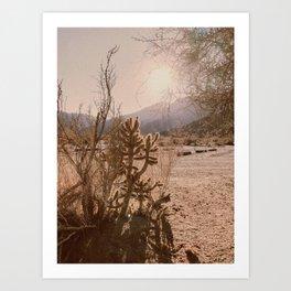 California Desert Art Print