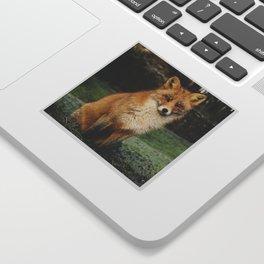 Beautiful Sitting Fox Sticker