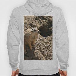 Meerkat Hoody
