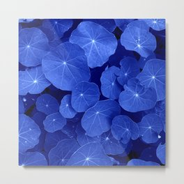 blue nasturtium leafs Metal Print