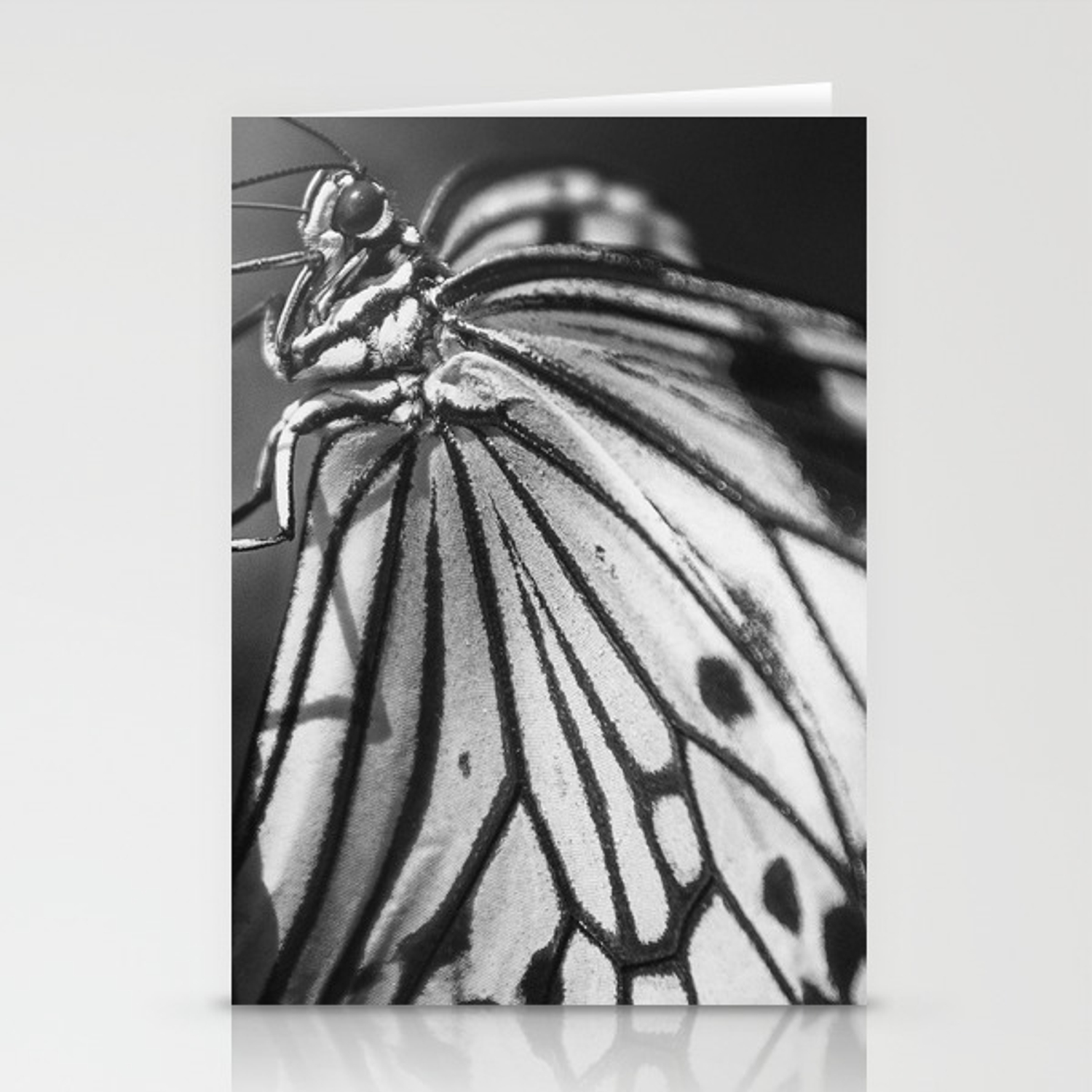 Minimalism butterfly photography nature stationery cards by wildhood