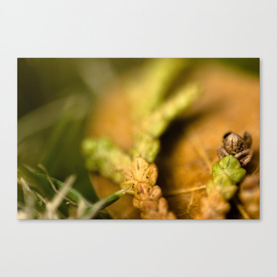 Tri Colored Pine Remains Canvas Print