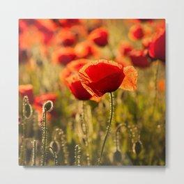 Poppies in LOVE - Poppy Flower Flowers Metal Print