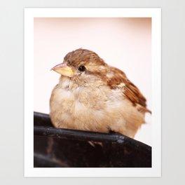 Sweet Little Birdie Art Print