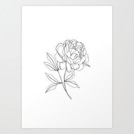 Botanical illustration line drawing - Peony Kunstdrucke